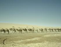 Qatar discovery